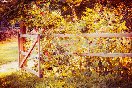 Fence and gate in an autumn garden with flowers and fall foliage, countryside