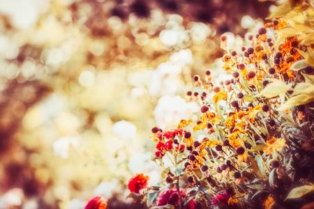 Beautiful autumn flowers garden  background, fall outdoor nature