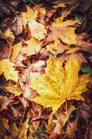 Beautiful autumn fallen leaves, top view, fall nature background Stock Photo