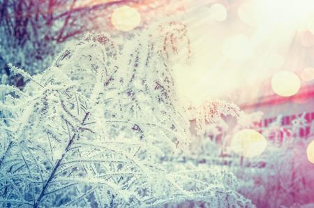 Winter Natur Hintergrund mit gefrorenen Pflanzen am schönen Sunbeam Hintergrund mit Bokeh Standard-Bild - 86251854