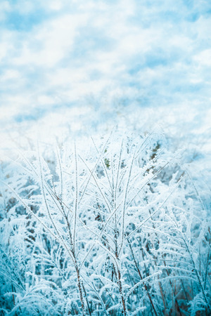 Winter nature background with frozen grass at beautiful  sky background Stock Photo