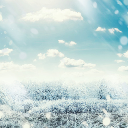 Beautiful winter frosty day landscape with snow tress , sky and snow fall Stock Photo