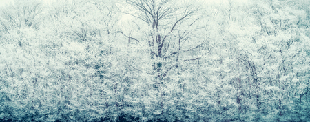 Winter background with frozen snow covered trees and branches, banner