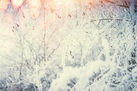 De achtergrond van de de winteraard met sneeuw behandelde installaties en grassen bij zon lichte achtergrond met bokeh