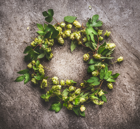Wreath of green hop twigs, ingredients for beer stock photography Brewing on gray background, top view Reklamní fotografie