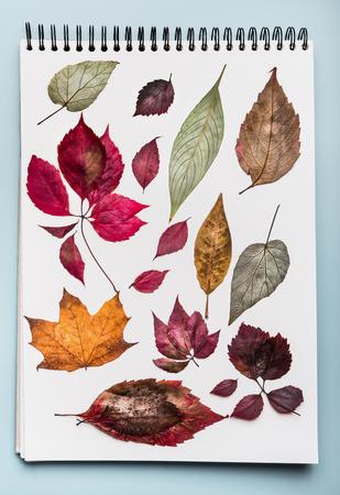 様々な色とりどりの紅葉が残るホワイトペーパーノート。秋の葉、トップビューと収容フォルダ