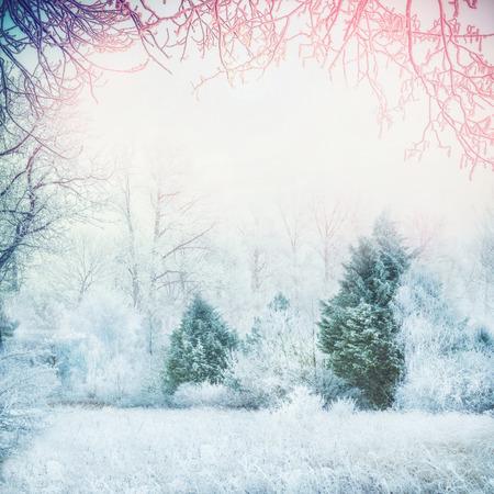 서리가 내린 나무, 전나무와 눈, 눈이 프레임 겨울 숲 풍경 덮여 분기
