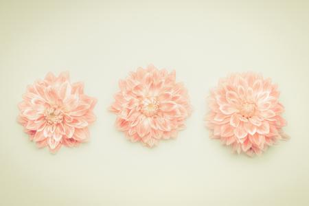 Beautiful pink pastel flowers on beige background top lovely beautiful pink pastel flowers on beige background top lovely greeting card stock photo mightylinksfo