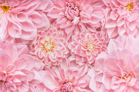 Pastel pink flowers background, top view, Layout  or greeting card for Mothers day, wedding or happy event 스톡 콘텐츠