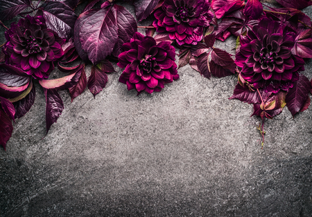 Dark purple floral border with flowers, petal and leaves on gray background, top view, place for text