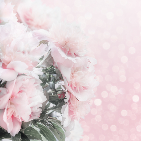 Pretty pastel pink peonies floral border with bokeh. Layout or greeting card for Mothers day, wedding or happy event