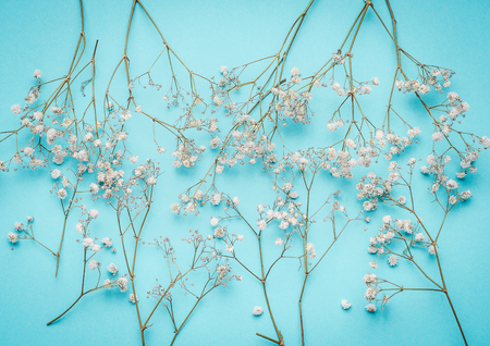 Floral layout with little white flowers at turquoise blue background, top view