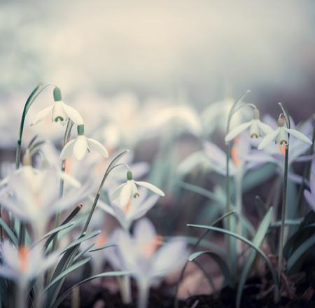 De lenteachtergrond met de lentebloemen, openluchtaard