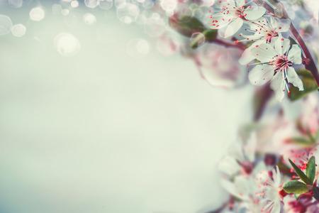 Springtime cherry blossom background with bokeh