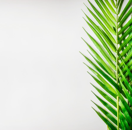 Tropical palm leaves on white desk background, top view, border