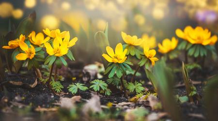 야생의 미나리 아재비 꽃, 봄이 야외 자연