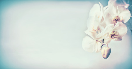 Pretty orchids flowers at blue pastel  background , copy space, template or banner Stock Photo