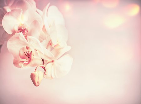 Beauty orchids flowers at pink pale background with bokeh