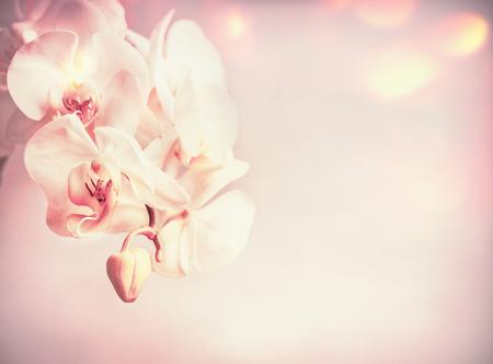 美しさは、ボケとピンクの淡い背景に花を蘭