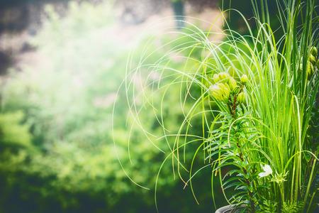 Groene zomer aard achtergrond met lelie en siergrassen Stockfoto
