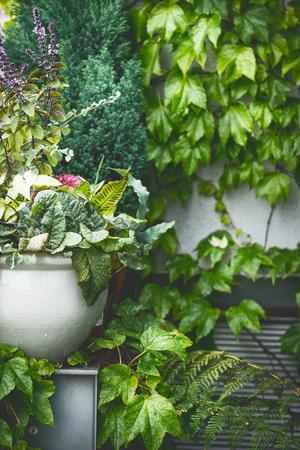 Groene zomerterras. Bloempot of planter op groene weelderige gebladerte muur