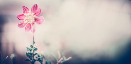 Pastel nature with pink flowers at blurred background. Template or banner