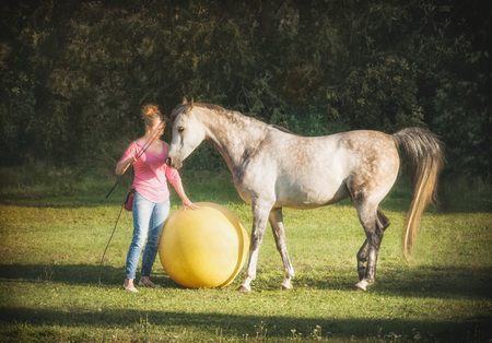 Free horse playing a big ball with a woman. Horsemanship scene. Horse free dressage