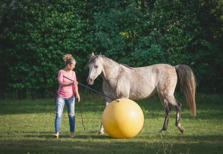 Free horse playing a big yellow ball with a woman. Horsemanship scene. Horse free dressage Imagens