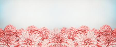 Pastel pink flowers banner or border on pale blue background, top view. Floral layout , mock up or template