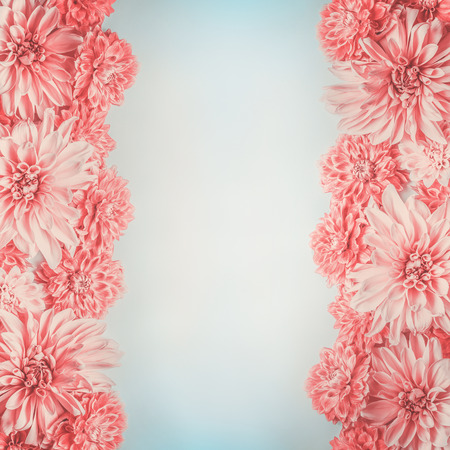 Pastel pink flowers frame on pale blue background, top view. Floral layout or mock up , vertical Stock Photo