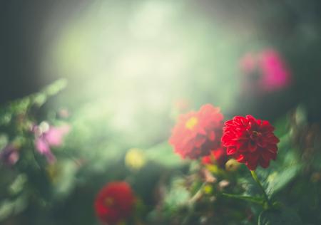 Red flowers in green summer garden, outdoor nature background