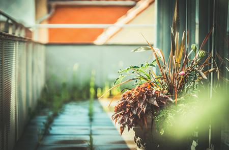 Stadsterras met planten. Stedelijk balkon tuinieren Stockfoto