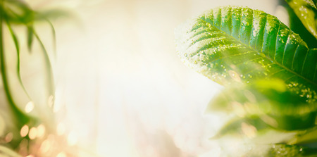 Summer nature background with green leaves, sunbeam and bokeh lighting. Banner, border or template for your design