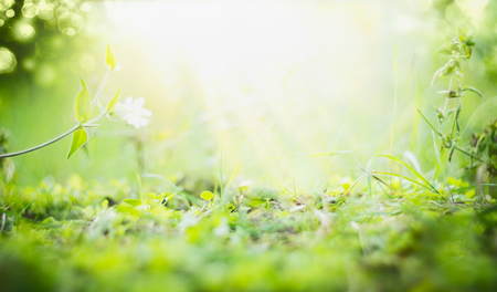Sunny summer background with green grass , sun shine and bokeh
