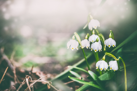 Pretty lily of the valley at spring nature background. Dreamy soft focus effect. Stock Photo