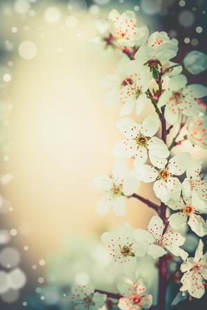 Pretty spring blossom floral frame