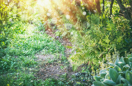 Shady garden with fern and sun rays, summer outdoor nature Stock Photo