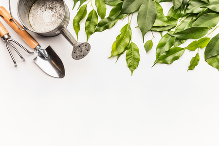 Watering can with gardening tools and green bunch of twigs and leaves on white desk background, top view, border Stock Photo