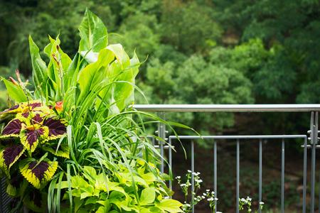 Mooie balkonplanterpot met kleurrijke sierplanten Stockfoto - 96246753