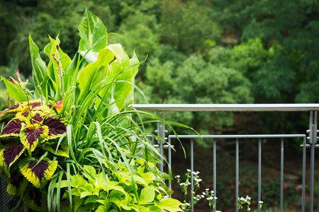 Pretty balcony planter pot with colorful ornamental plants