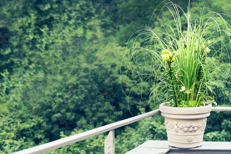 Green decorative plants flowers pot with  ornamental grass and lily on balcony