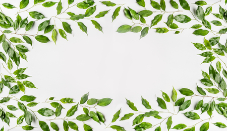 Pretty Frame made of green branches and leaves on white background. Flat lay, top view, horizontal, banner Stock Photo