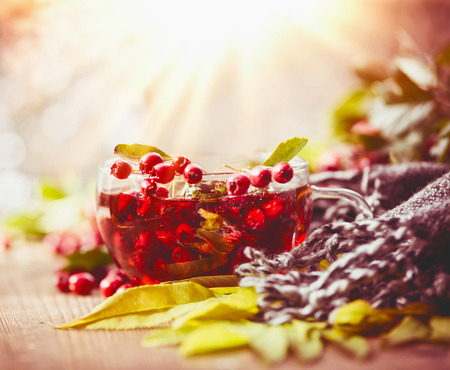 Cup of autumn tea with red berries, leaves and scarf  on table at sunny nature background Stock Photo