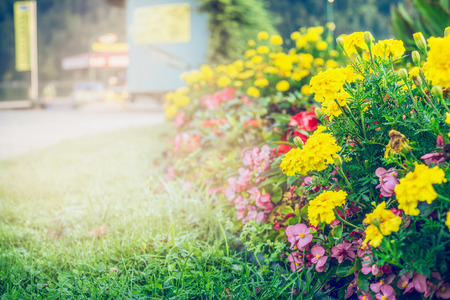 Summer garden or park landscaping with beautiful  flowers bed , outdoor nature
