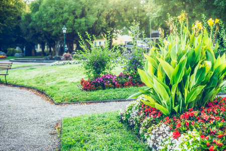 Summer garden or park landscaping with beautiful canna and flowers bed , outdoor nature