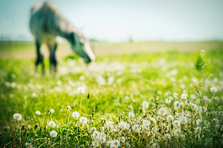 Summer horse pasture with various herbs and grasses