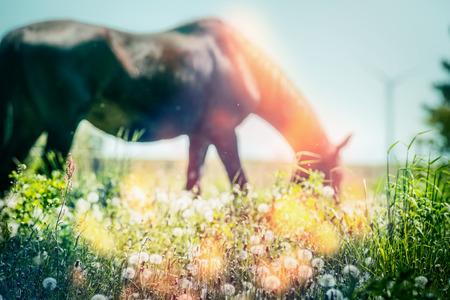 Horse summer pasture grasses 스톡 콘텐츠