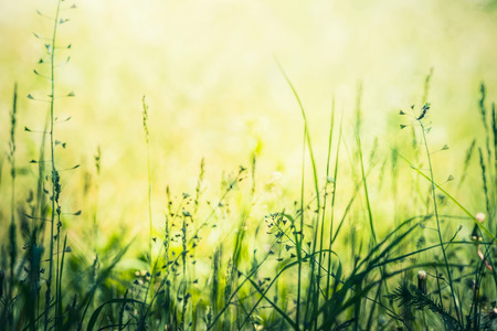 Wild summer nature with grasses, herbs and flowers