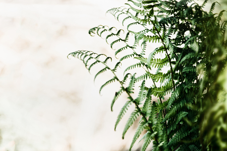 Fern leaves at blurred nature background