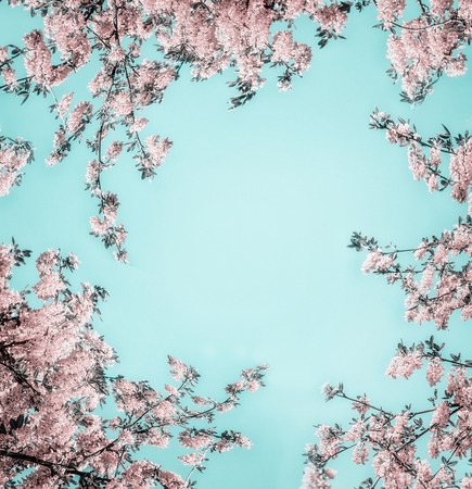 Beautiful floral background with pastel pink blossom on light turquoise, frame. Creative nature flowers layout Stockfoto